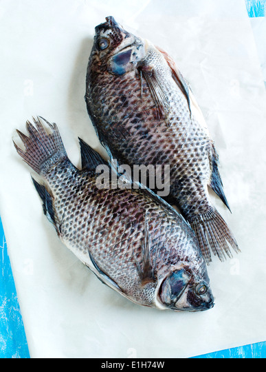 Tilapia fish stock photos tilapia fish stock images alamy for Is tilapia a man made fish
