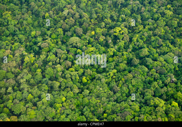 Tropical rainforest canopy from the air Tortuguero National Park Costa Rica - Stock Image & Tropical Rainforest Biome Stock Photos u0026 Tropical Rainforest Biome ...