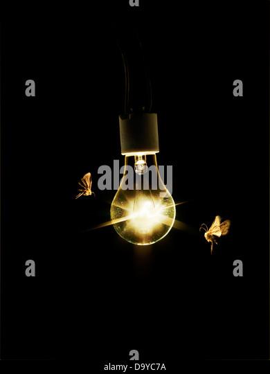 Moth Light Stock Photos & Moth Light Stock Images - Alamy:Light Bulb with Moths - Stock Image,Lighting