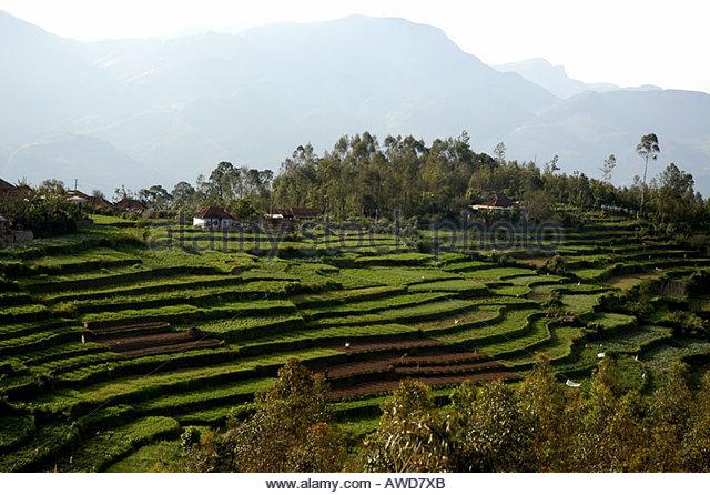Marayoor stock photos marayoor stock images alamy for Terrace farming in india