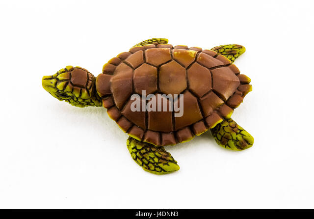 Turtle Toy Stock Photos & Turtle Toy Stock Images - Alamy