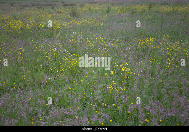 natural wood meadow grass - photo #22