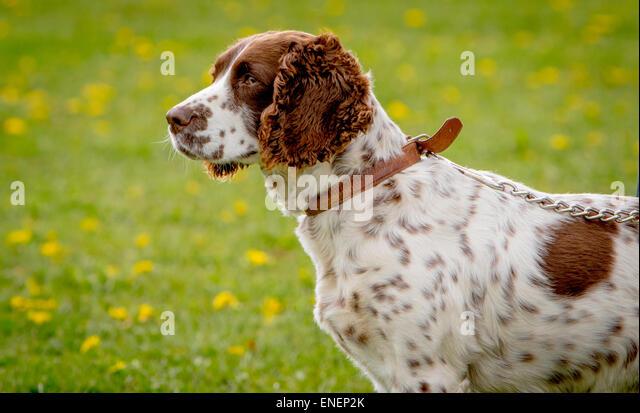 Alvechurch Dog Show