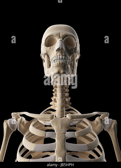Human Skull And Neck Bones Stock Photos & Human Skull And Neck Bones ...