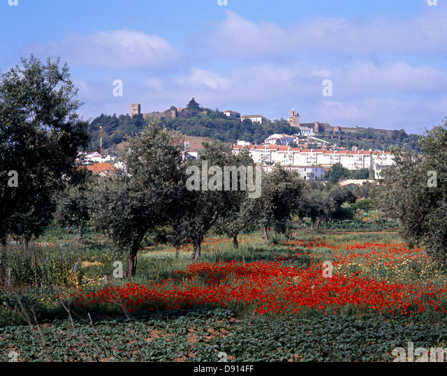 poppy field with town and castle to rear portel alentejo region portugal