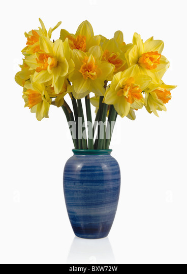 Daffodils Spring Wales Cut Out Stock Images Pictures Alamy
