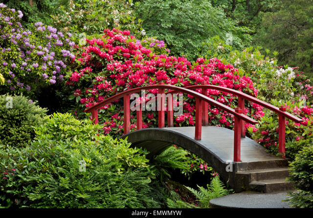 washington moon bridge surrounded by colorful rhododendrons at seattles