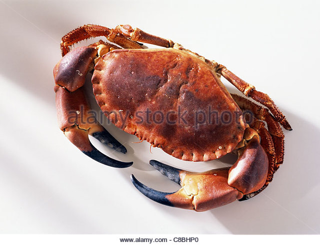 Related Keywords & Suggestions for edible crab
