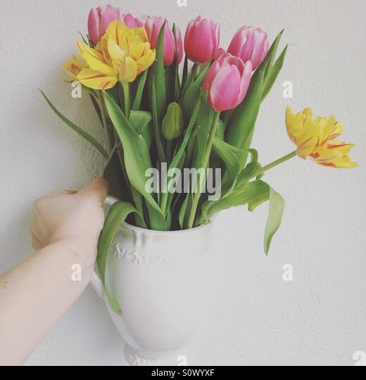 flower tulip hand stock photos flower tulip hand stock. Black Bedroom Furniture Sets. Home Design Ideas