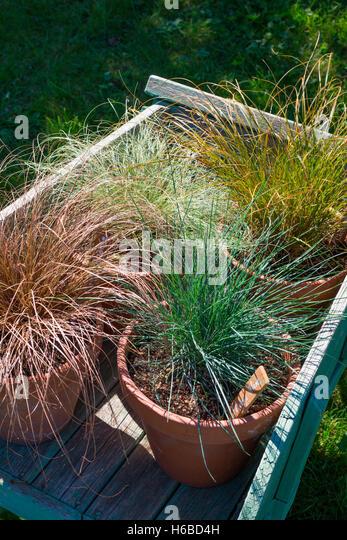 Beautiful Carex Bronze Reflection Gallery - Home Design Ideas ...