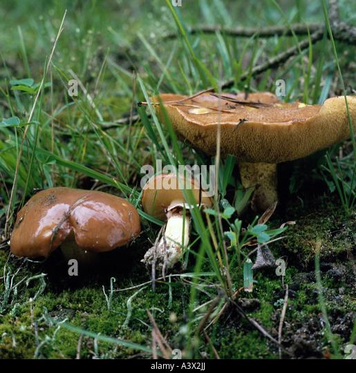 Botany fungi