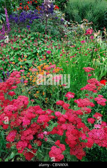 Mixed garden border stock photos mixed garden border for Herbaceous border design examples
