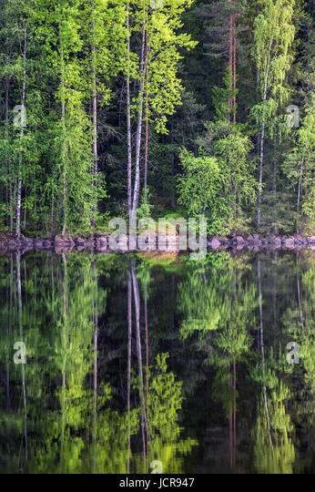 Beautiful forest reflection from lake at bright summer day in Liesjärvi National Park, Finland - Stock Image