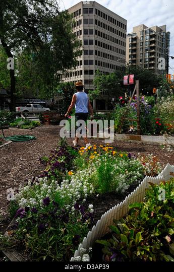 Community Garden Canada Stock Photos Community Garden