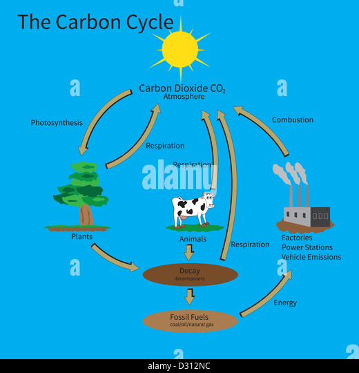 the carbon cycle the movement of carbon throughout the biosphere Several options for assessing student understanding are provided throughout climate and the carbon cycle climate and the biosphere climate and the carbon cycle.