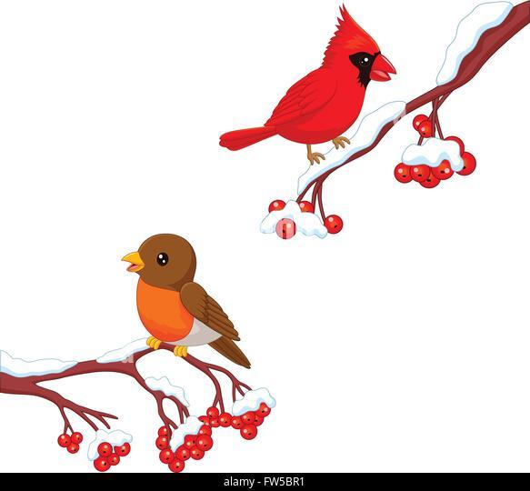 Flying Robin Illustration Stock Photos & Flying Robin ...