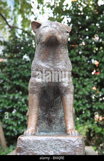 Hachiko Akita Dog Stock Photos & Hachiko Akita Dog Stock ...