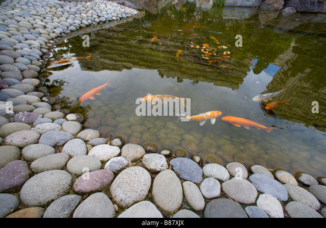 Koi japan stock photos koi japan stock images alamy for Artificial fish pond