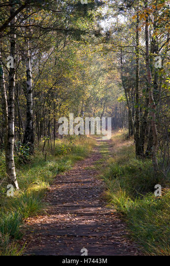 path in the birch - photo #25