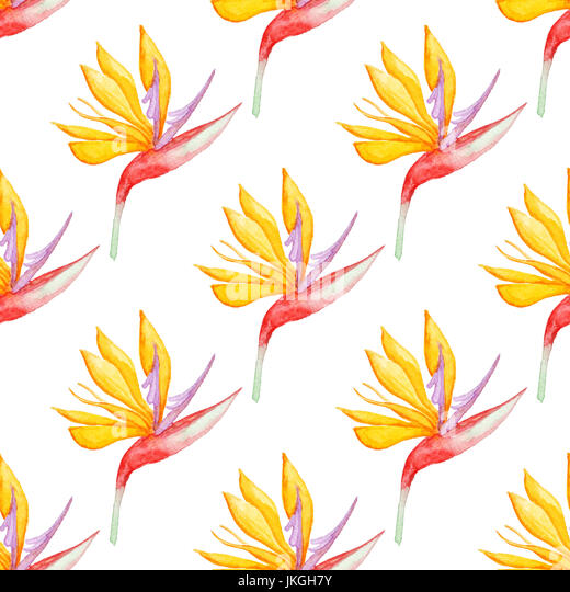 white yellow tropical flowers stock photos  white yellow tropical, Beautiful flower