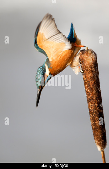 kingfisher divorced singles Find more divorce court information in shawnee county, kansas.