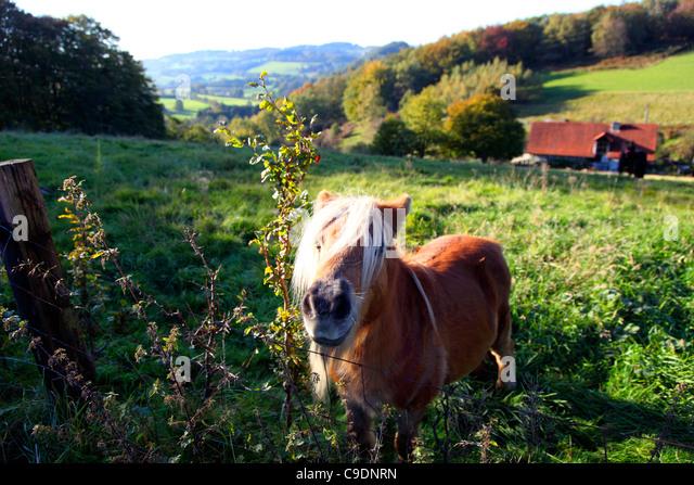 Golden Corral Stock Photos Golden Corral Stock Images