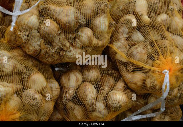 autumn bulbs stock photos autumn bulbs stock images alamy. Black Bedroom Furniture Sets. Home Design Ideas