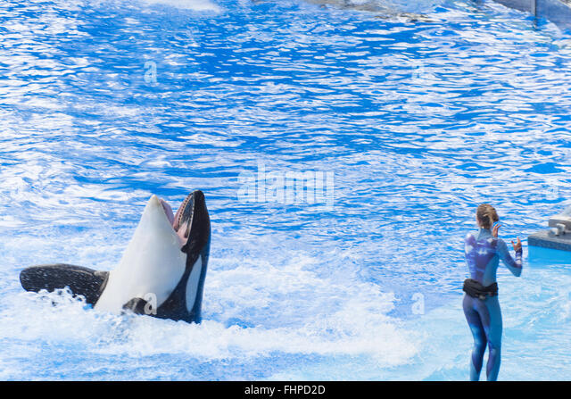 orca whales captive or free One hundred percent of male orcas in captivity have came of age watching the free willy films and attending the popular shamu shows at seaworld killer whales.