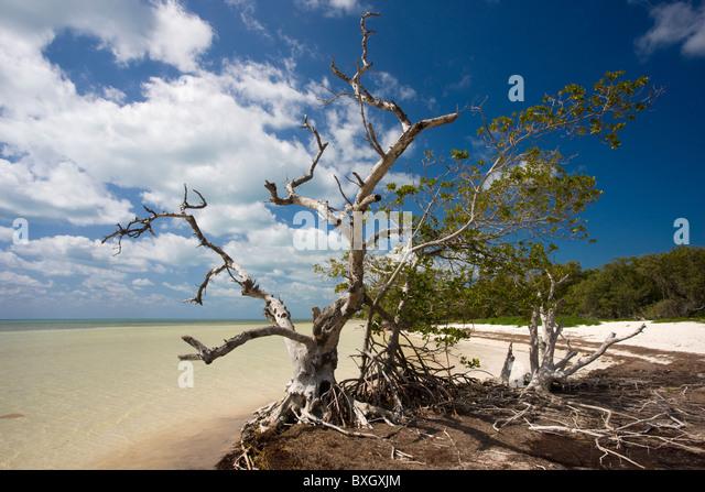 Florida Mangrove Cut Treasure Beach