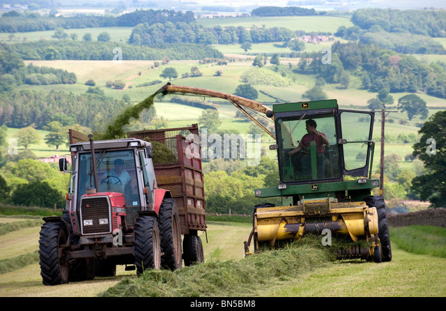 how to make silage for cattle
