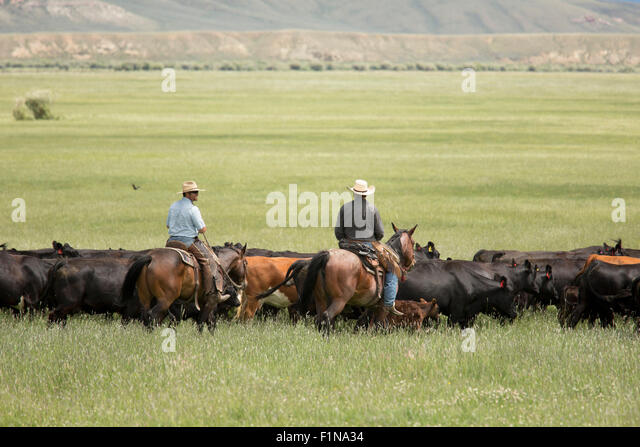 Image result for CATTLE RANCHES AND COWBOYS