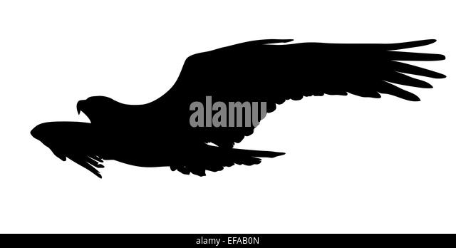 Bald Eagle Flying Cut Out Stock Images & Pictures - Alamy Flying Hawk Silhouette Vector