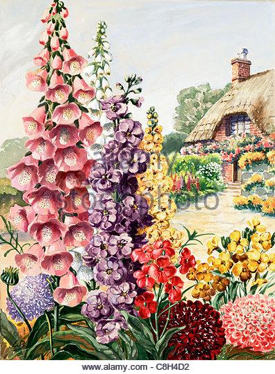 Foxglove illustration stock photos foxglove illustration for English garden wall mural