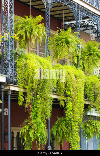 New orleans bourbon street balcony stock photos new - Hanging plants in balcony ...