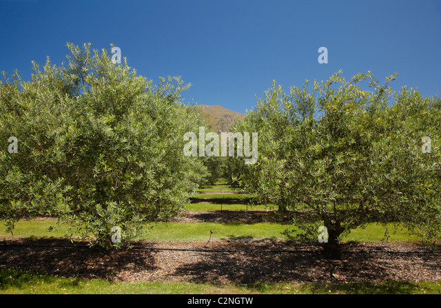 Fruit Farm In New Zealand South Island