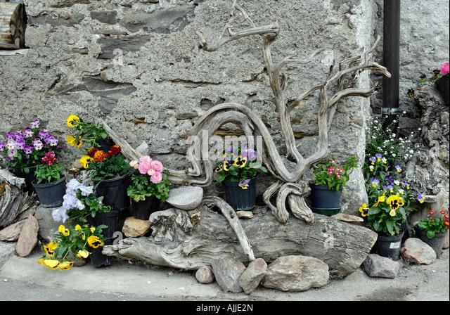 steingarten gewächs stock photos & steingarten gewächs stock ... - Stein Garten Design