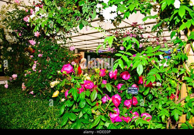 Sculpture david rhs chelsea flower stock photos Austin home amp garden show