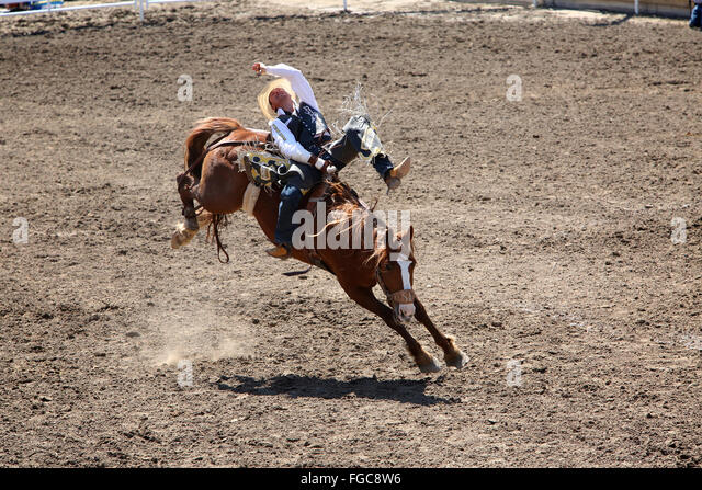 Bucking Horses Stock Photos Amp Bucking Horses Stock Images