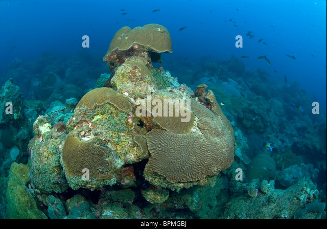 Coral Formation Stock Photos Coral Formation Stock Images Alamy