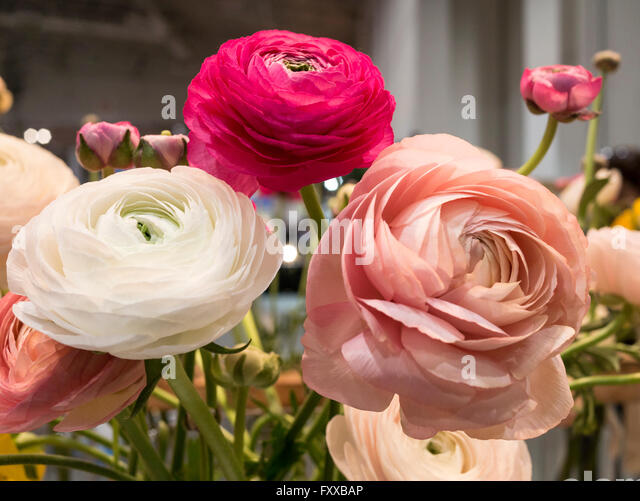 flowers on display in spring home and garden trade show stock image - Home And Garden Trade Shows