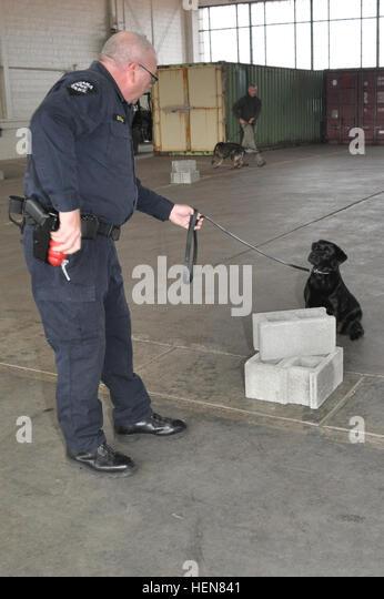 Dog Training Shirley Institute