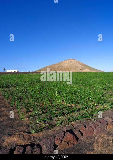 fertile soil volcano - photo #7