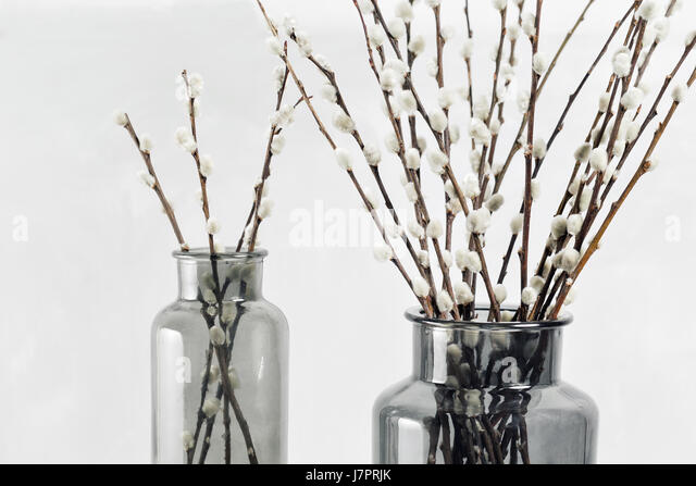 Willow Branches Stock Photos Willow Branches Stock Images Alamy