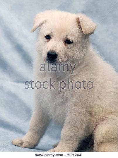 Puppy Dog Eyes Synonym