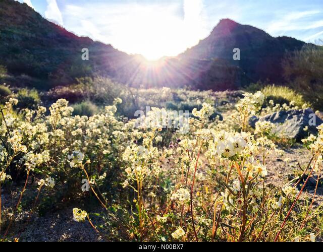 joshua-tree-national-park-california-usa