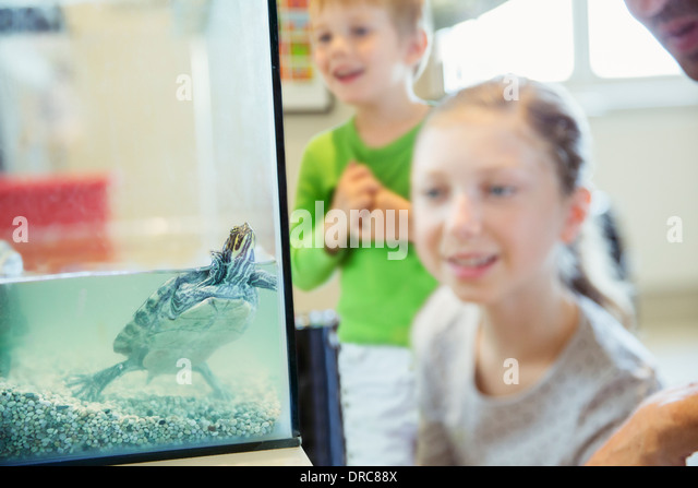 Pets Stock Photos Amp Images Pets Stock Photography Page