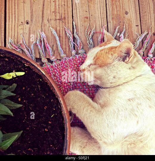 Cat Sleeping Rug Cat Stock Photos Amp Cat Sleeping Rug Cat