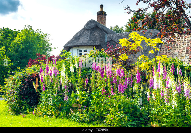Cottage Garden Stock Photos Images