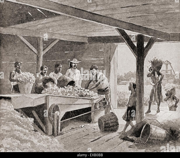 united states and gin change slavery After the invention of the cotton gin in  in the united states,  it also did not place any restrictions on slavery within any new states formed from the.