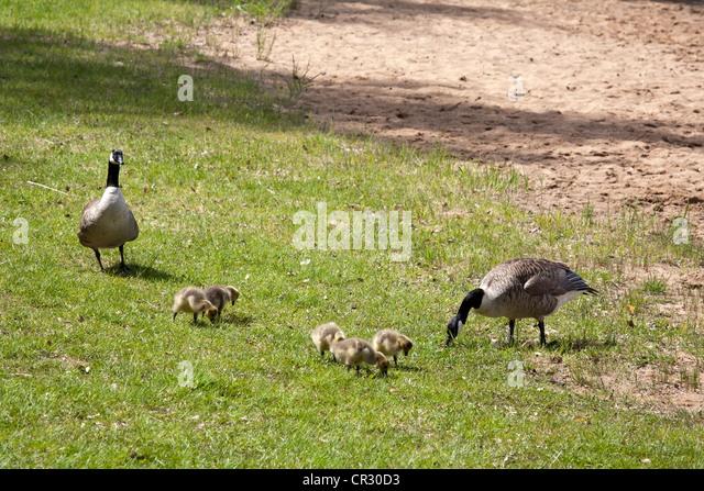canada goose finland price